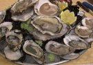 بندرلنگه صادر کننده صدف خوراکی پرورشی میشود