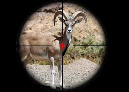 سلاخی دو راس حیوان توسط شکارچیان غیرمجاز